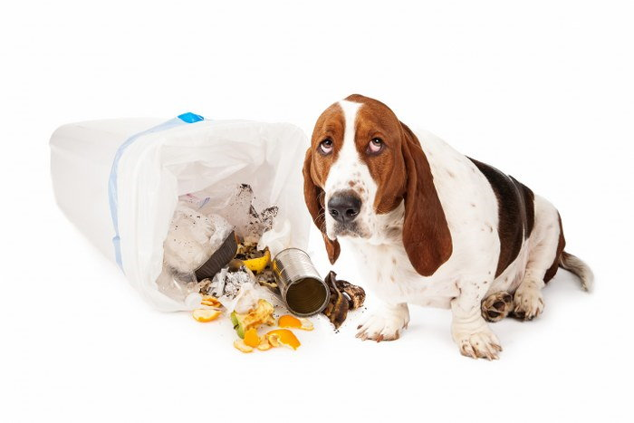 Stopping Your Dog Destroying Your Trash